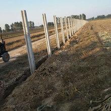 預制板圍墻A濱州環保水泥圍墻A養殖場臨時圍墻廠家