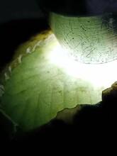 多利多赌石14-ATF154莫西沙冰种牌子吊坠料翡翠原石图片