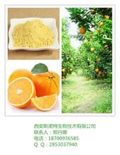 橙子粉甜橙粉橙子提取物橙味食品饮料原料斯诺特专业提取