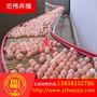 供应新型层叠式蛋鸡全自动捡蛋机自动收蛋机荥阳宏伟图片
