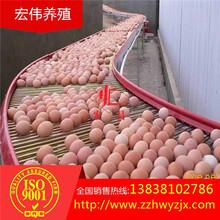 热镀锌蛋鸡自动化设备自动捡蛋机运行平稳破蛋率低厂家直销