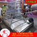 厂家直销传送带清粪机养鸡设备