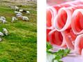 正宗宁夏盐池滩羊北京销售图片