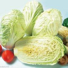 北京正宗膠州大白菜銷售圖片