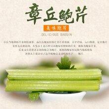 北京濰坊蘿卜圖片