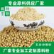 水果粉、蔬菜粉、五谷杂粮粉、药食两用粉原料供应