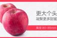 新鲜苹果水果山东烟台栖霞红富士特产不打蜡生鲜平果5斤包邮吃的