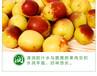冬枣新鲜水果预售山东特产水果生鲜时令应季大枣枣子