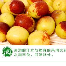 冬棗新鮮水果預售山東特產水果生鮮時令應季大棗棗子圖片