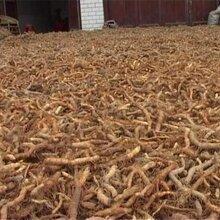 银鸿农业提醒你:药材七大跌价品种,谨慎种植!
