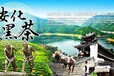 黑茶供應就找銀鴻農業——重信譽求品質,銀鴻農業不負眾望成綠色代言