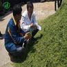重慶青貯飼料機價格