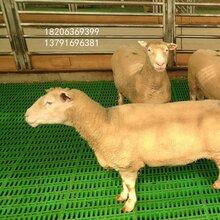 重庆质优价廉纯原料羊粪板羊圈专用塑料羊粪板羊塑料垫板图片
