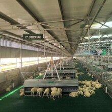 新疆昌吉熟料塑料羊粪板,羊粪漏粪格栅板,羔羊养殖地板图片