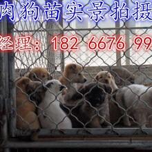 唐山肉狗养殖场肉狗价格肉狗图片