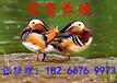 天津羊驼租赁特种动物租赁北京羊驼租赁公司