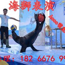 专业海洋展海狮租赁海豹企鹅展览出租深海鱼缸水母展表演效果