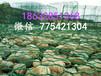 贵州雷诺护垫专业供应贵州雷诺护垫雷诺护垫厂家