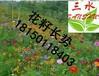 云南玉溪景观花籽草籽品种有哪些