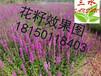 云南普洱思茅区边坡绿化常用的花种花籽多年生耐旱