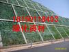 云南玉溪江川县边坡常用草种四季青固土护坡
