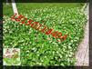 云南昆明市高速公路\铁路\河道护坡绿化工程草?#26893;?#22378;的喷播植草
