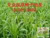 福建三明市想买草种就找三水园林低价出售