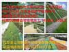 云南玉溪江川县岩质边坡喷射植被混凝土植生基材配比方法