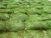 福建龙岩绿化公司常年出售稳固护坡材料