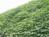 昆明草种批发市场专卖边坡草籽量大从优
