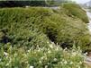 昆明卖边坡绿化草籽的公司在哪里