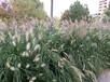 變道邊坡綠化防護植草祿勸縣技術種草
