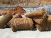 龙岩市框格植草复绿施工选取优质防护网稳固坡面