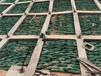 护坡工程绿化专用塑料三维网寻甸县厂家直销