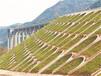 祿勸縣邊坡綠化施工植草復綠專用護坡草籽出售