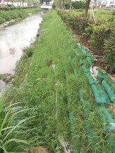 河道池塘边坡复绿草花种子浙江低价出售图片