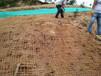龙岩市三水园林真实诚恳提供护坡资材