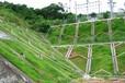 龙岩市专业提供高陡岩石坡面护坡可用灌木种子
