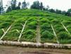 龙岩市软质岩边坡植草防护施工技术提供