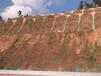 龙岩市岩石风化石边坡绿化专业厚层基材喷射复绿