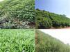 裸圖坡面植草恢復生態綠化草灌混播效果好