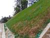 黔南地区边坡施工项目要绿化通常会在哪里买草子?