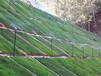 貴州畢節山體工程復綠開采施工生態修復草灌種子
