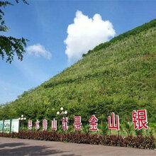 高速公路邊坡生態復綠草籽舟山哪里有怎么賣圖片