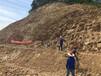 浙江杭州市專業施工承包噴播草籽護坡復綠