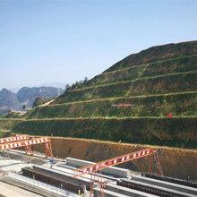 中建高速公路护坡灌木草种子绍兴市专业售卖图片