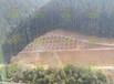 南方高速護坡草籽杭州市提供常用種子