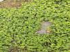低價優質直銷湖州市路基上下坡綠化草籽灌木種子