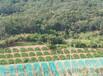 購買護坡草籽杭州種子市場常年優惠價格實惠