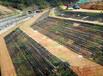 杭州礦山邊坡綠化工程施工用什么資材?